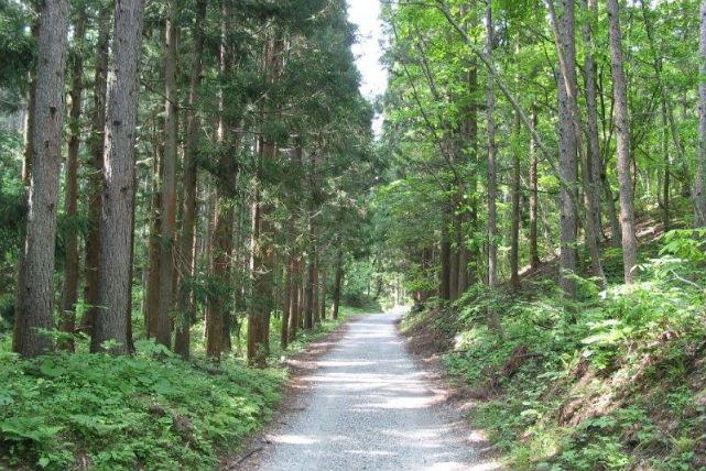 【長野県・大町市・エコツアー】名水100選の姫川源流、美しい親海湿原を歩こう
