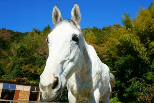 【千葉・乗馬】小さなお子さまも歓迎!ゆっくりお散歩できる引き馬体験
