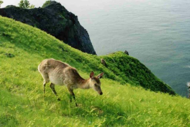 【知床・エコツアー】ご家族でも楽しめる、フレペの滝散策。大自然に圧倒されます!