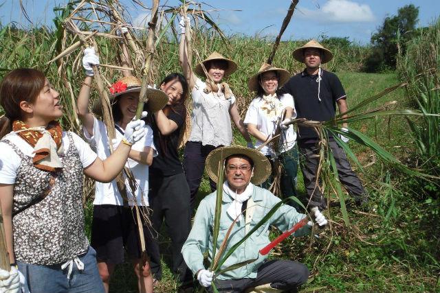 【沖縄・沖縄文化体験】キッズも大歓迎!サトウキビ刈りと黒糖作り体験!3名様以上でお得な割引あり!