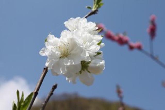 【岐阜・エコツアー】キッズも大満足!オリジナルの草花図鑑と工作体験プラン