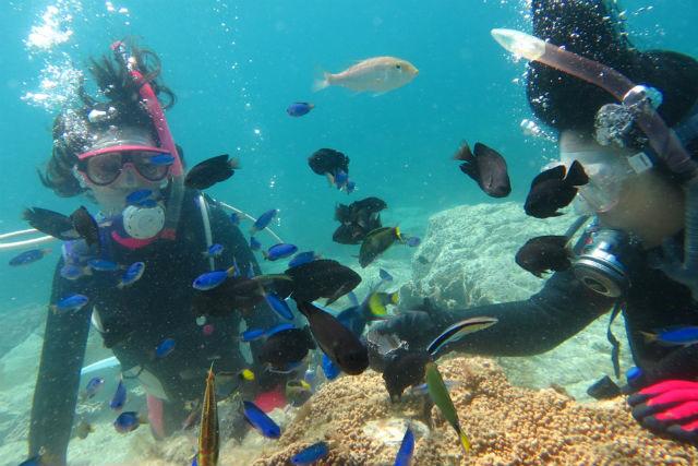 【鹿児島・体験ダイビング】初心者大歓迎!鹿児島の海で体験ダイビング