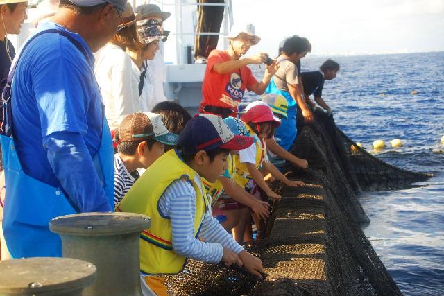 【沖縄・漁業体験】マンタやジンベイザメも!?何が捕れるかお楽しみ大型定置網漁体験