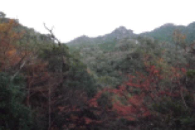 【屋久島・エコツアー】登山初心者OK!自然の魅力を手軽に味わえる太忠岳コース