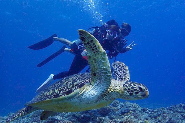【慶良間・半日・体験ダイビング】クルーザーで慶良間の海へ!世界屈指の海にもぐる大人気ツアー!(午前)