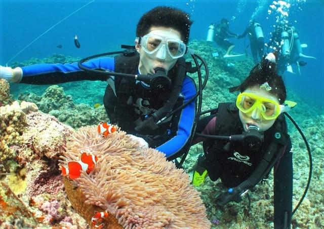 【慶良間・半日・体験ダイビング】クルーザーでケラマブルーの海へ!世界屈指のポイントを満喫!(午後)