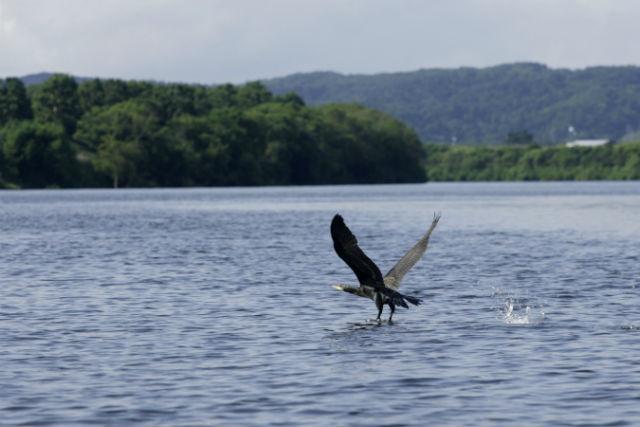 【北海道・美深町・ラフティング】野鳥や野生生物にも会えるかも!自然を味わうラフティング