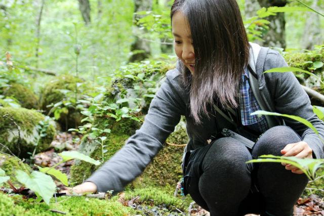 【青森・十和田・ガイドツアー】初心者向け!奥入瀬渓流でさまざまなコケを眺めよう