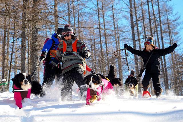 【長野・スノーシュー】雪原を愛犬が駆け回る!ワンコ連れスノーシュー