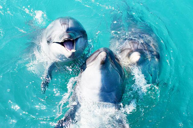 【沖縄・本部町・イルカ観察】プールサイドに笑顔咲く!ドルフィンウォーキングツアー