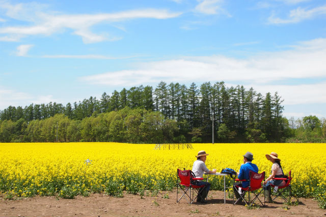 【北海道・帯広・農業体験】食事付き!春をいっぱい味わう菜の花畑ツアー