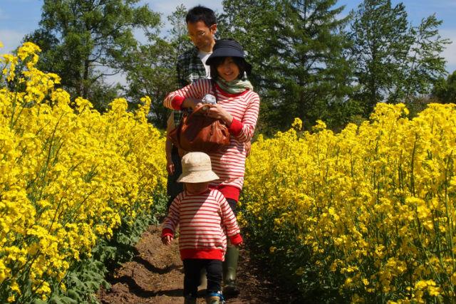 【北海道・帯広・農業体験】おやつ付き!春をいっぱい味わう菜の花畑ツアー