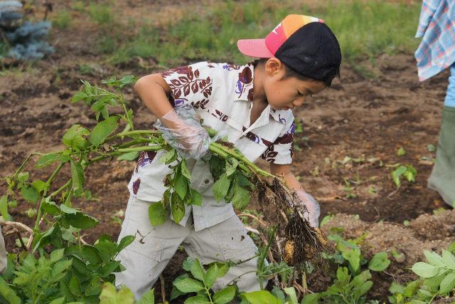 【北海道・農業体験】食事付き!じゃがいもを掘って揚げて召し上がれ