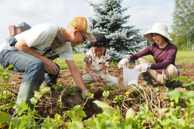 【北海道・農業体験】おやつ付き!じゃがいもを掘って揚げて召し上がれ