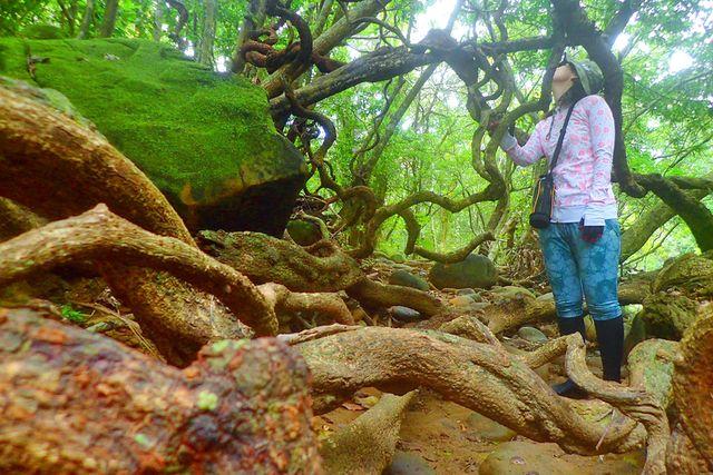 【西表島・トレッキング】子どもと一緒にプチジャングル探検!モダマ池を目指そう(写真付き)