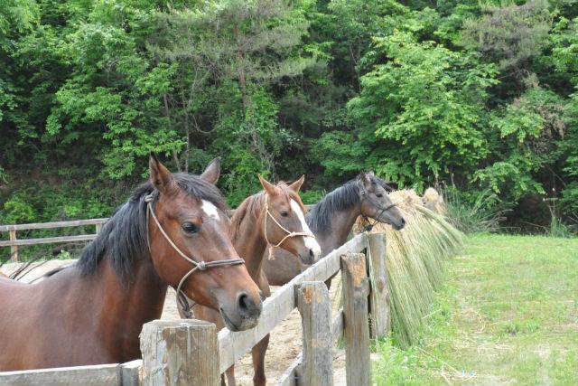 【京都・乗馬】乗馬レッスン付き!馬にのって京都の里山をお散歩しよう!