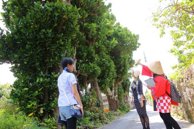 【沖縄・うるま市・ガイドツアー】浜比嘉島をまわろう!集落散策&しまんちゅ交流ツアー