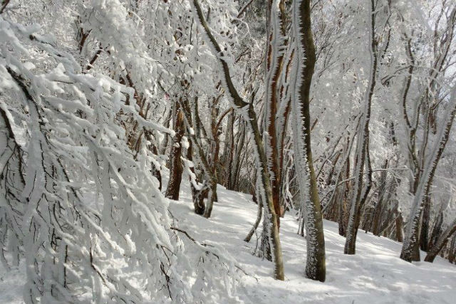 48e9134505 奈良・三峰山・ガイドツアー】初めての冬山にチャレンジ!樹氷の三峰山 ...