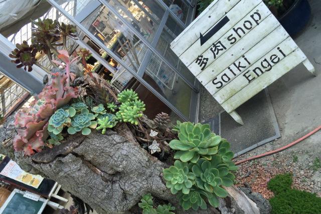 【愛媛・寄せ植え体験】200種以上からアレンジメントが楽しめる!多肉植物寄せ植え体験