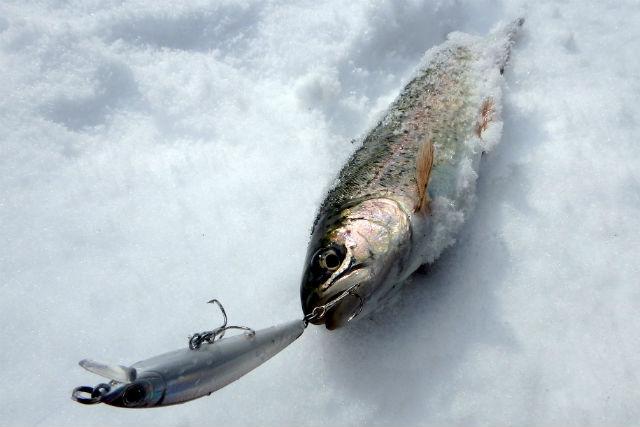 【山梨・釣り体験】八ヶ岳の釣り堀で、ニジマスを釣り上げよう!ルアー釣り体験