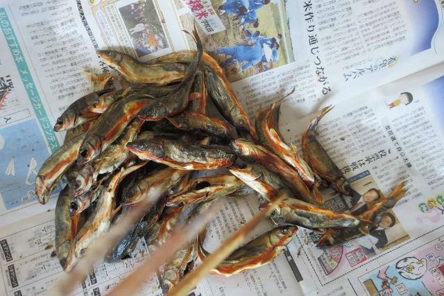 ワカサギは、天ぷらにすると格別の美味しさ!カルシウム・ビタミンAなどが豊富です。