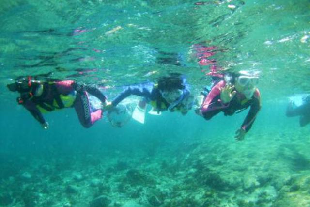 【静岡・伊豆・シュノーケリング】6歳からどうぞ!海の生き物を見に行こう