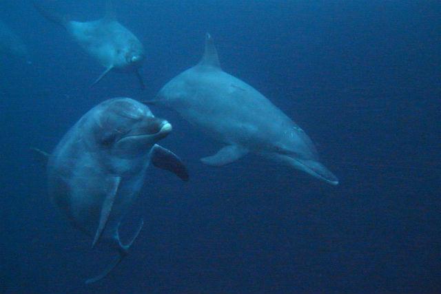 【東京・江東区・ドルフィンスイム】東京からの送迎無料!広い海でイルカと遊ぼう!