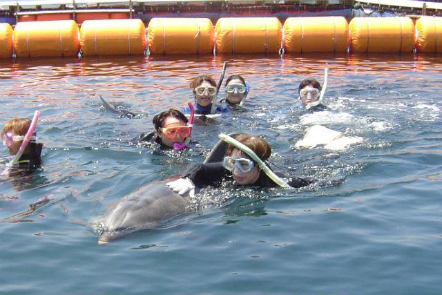 【静岡・伊東・イルカツアー】イルカと泳いで、イルカに詳しくなろう!(渋谷駅/川口駅から送迎)