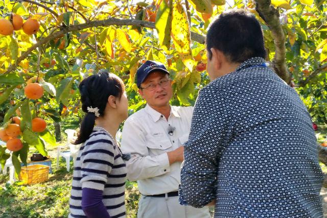 【和歌山・柿狩り】あま~い「富有柿」を食べ放題!ゆったり楽しめる時間無制限プラン