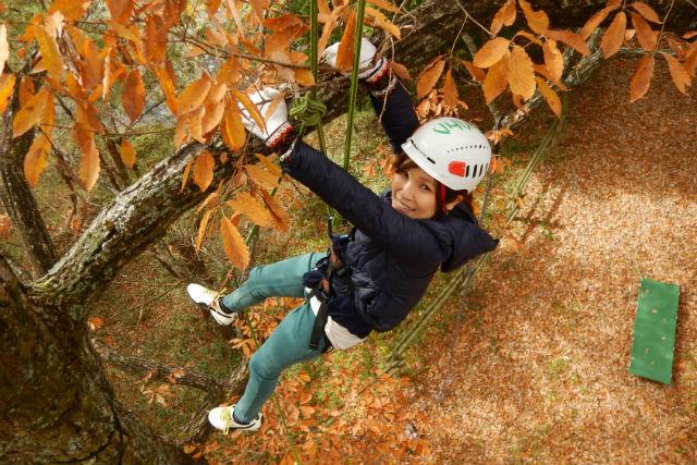 【広島・ツリーイング】ファミリーで楽しめる!エキサイティングな木登り体験