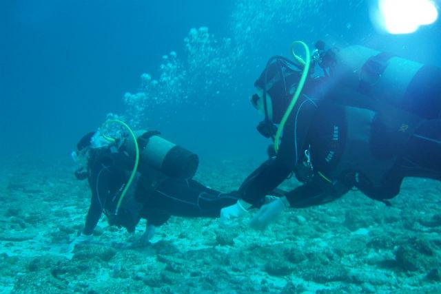 【神奈川・城ヶ島・ファンダイビング】生き物と地形のダイナミズム!ライセンス保持者向けボートダイビング