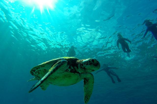 【屋久島・体験ダイビング】初心者から世界遺産の海にダイブ!半日コース