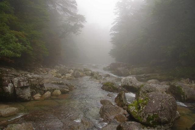【鹿児島・屋久島・トレッキング】屋久杉を見に原生林へ行こう!ヤクスギランドツアー