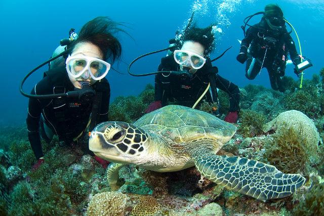 【鹿児島・屋久島・体験ダイビング】世界遺産の島で、海の神秘を満喫!1ダイブ・コース(3時間)