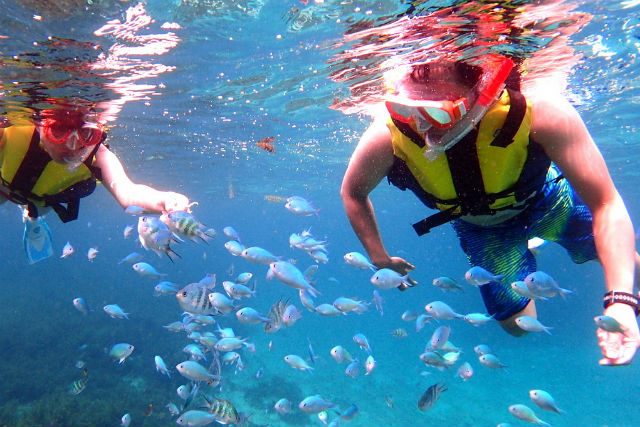 【静岡・伊東・シュノーケリング】練習してから海に入れる!伊豆海洋公園シュノーケリング