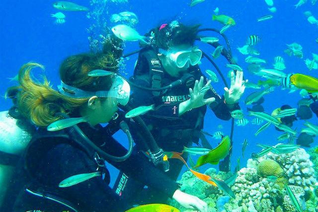 【沖縄/本部町・美ら海水族館近く】水納島ボート体験ダイビング+シュノーケリング  上陸1日コース