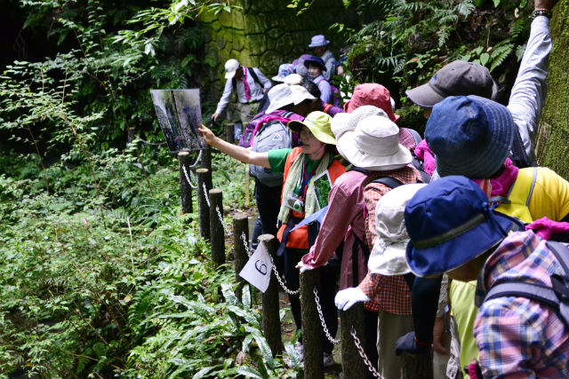 【愛媛・ガイドツアー】秘境の谷をご案内!桂川渓谷ツアー