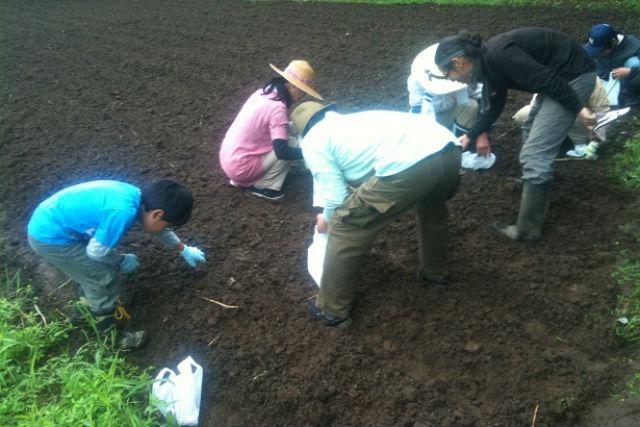 【千葉・農業体験】1年を通して農業を満喫!大豆の農場オーナーになろう!