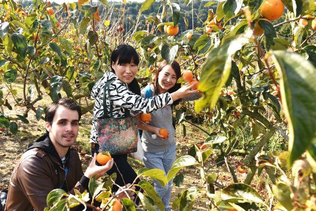 【兵庫・神戸市・柿狩り】秋の風物詩を味わおう!柿狩りプラン