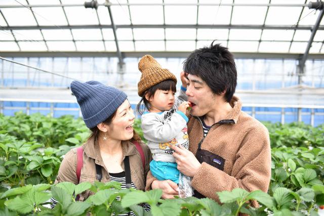 【和歌山・イチゴ狩り】3種類のイチゴを食べ放題!イチゴ狩りプラン(40分)