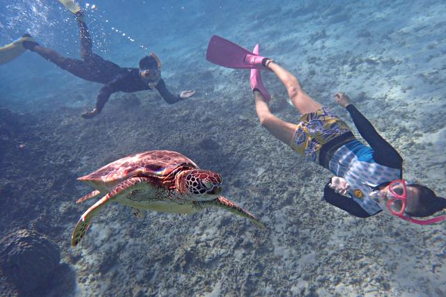 【鹿児島・奄美大島・シュノーケル&SUP】海上&海中で遊ぼう!ミドルステイプラン