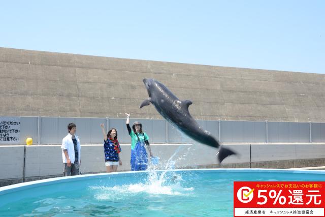 【高知・室戸・イルカツアー】イルカにサインを出してみよう!トレーナー体験