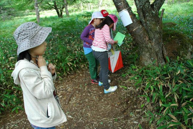 【長野・茅野市・エコツアー】地図を頼りに森を探検!クイズウォークラリー(ソフトクリーム作り付き)
