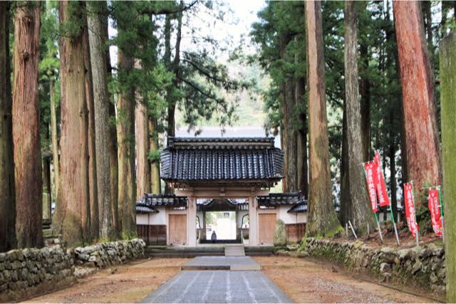 【富山】五感で森を感じる。トコトコ森林セラピー(120分)