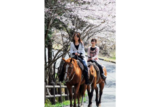 【熊本・阿蘇市・乗馬体験】夕方のお散歩を楽しもう!ハイランドコース