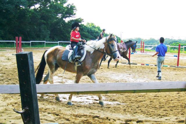 【福岡・乗馬体験】少しずつ上達を目指そう!乗馬体験・4回チケット