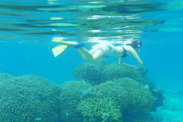 【鹿児島・与論島・シュノーケリング】ボートで巨大サンゴ群へ!赤崎サンゴの森シュノーケリング