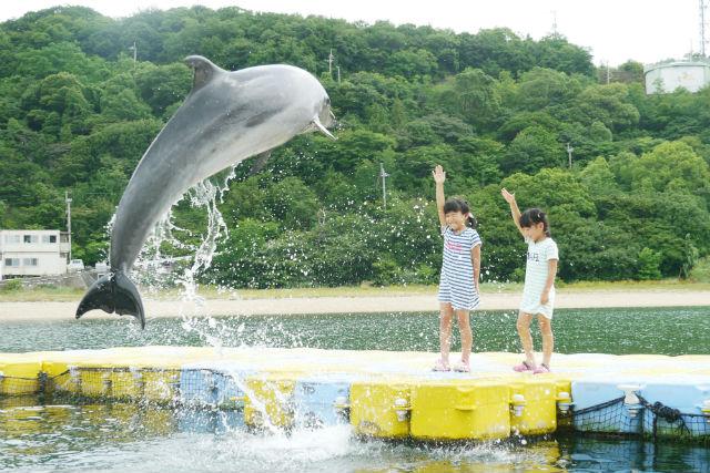 【香川・イルカツアー】入場料込み!イルカジャンプのトレーナー体験
