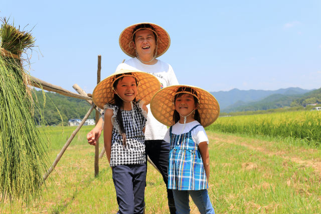 【岐阜・山県・農業体験】楽しもう稲刈り!(おいしい稲架がけ米 精米3kgプレゼント)