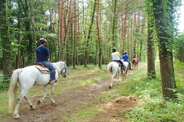 【山梨・乗馬】馬との森林浴を楽しむ、癒しの日帰りプラン